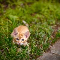 Small Kitten Getting ready to pounce