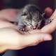 Tiny kitten in a hand