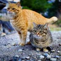 Two Cute Cats in the street