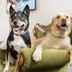 Two Dogs on the Green Couch
