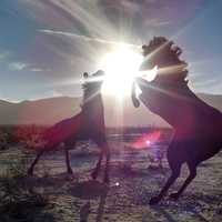 Two horses playing in the sunlight