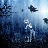 Wolves in the spooky forest at twilight