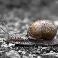 Detailed snail crawling across the ground