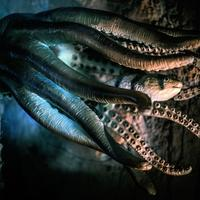 Octopus eating a fish in the deep sea