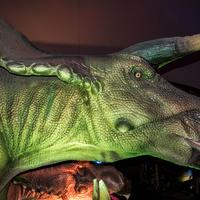 Head of Triceratops