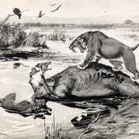 Sabertooth Tiger and Dire Wolf at Tar pits