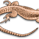 Brown Lizard Vector