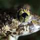 Closeup macro of a frog