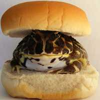 Toad Burger and buns