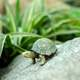 Small green turtle on rock