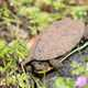 Turtle in the spring