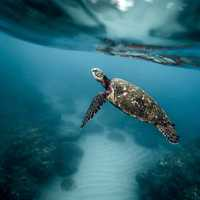 Underwater photo of a turtle