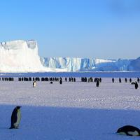 Colony of Penguins in Antarctica