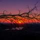 Sunset behind the tree branches beyond the horizon