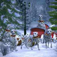 Several Dalmatians Pulling a Christmas Sleigh