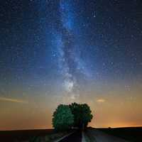 Milky way sky above the tree