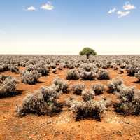 Shrubs on the ground and tree in the middle at World's End in South Australia