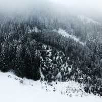 Snow-covered Pine Forest in the Mountains