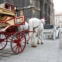Horse and Carriage in Vienna, Austria