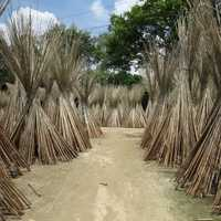 Straw tents in Bangladesh