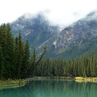 River and forest landscape near the Bow River in Banff National Park, Alberta, Canada