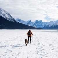 Cross Country Skiing with dog in Jasper National Park, Alberta, Canada