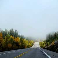 Foggy Roadway with trees on the side in Jasper National Park, Alberta, Canada