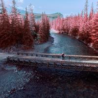 River Landscape with pink trees in Jasper National Park, Alberta, Canada