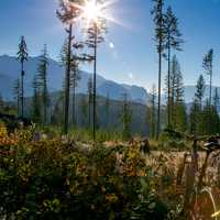 Sunlight while biking in British Columbia