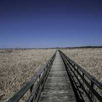 Boardwalk through the Marsh at Hecla Provincial Park