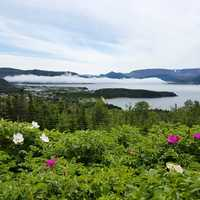 Norris Point overlook landscape