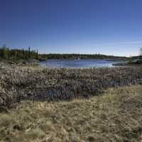 Marsh and Wetland Landscape on the Ingraham Trail