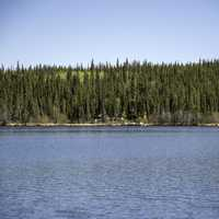 Pine Forest on the Opposite Shore on the Ingraham Trail