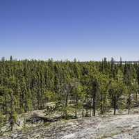 Pine trees below the rock under blue skies on the Ingraham Trail