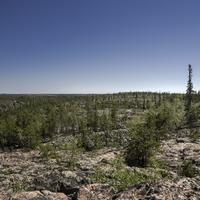 Pine Trees on the Rock on the Ingraham Trail