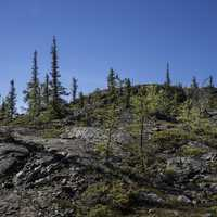 Trees on a rocky hill on the Ingraham Trail