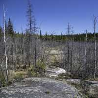 Trees, rocks, and landscape on the Ingraham Trail