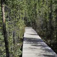 Wooden Boardwalk through the forest on the Cameron Falls Trail