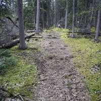 Path through the woods at Lady Evelyn Falls Territorial Park