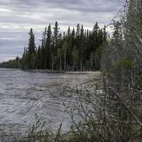 Shoreline with trees at Chan lake Territorial Park