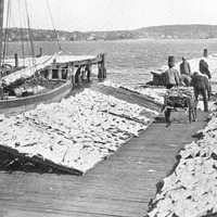 Fish Drying on the Wharf in Halifax, Nova Scotia, Canada