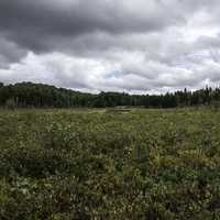 Cloudy Skies over the Bog at Algonquin Provincial Park, Ontario