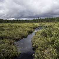 Creek flowing through the bog landscape at Algonquin Provincial Park, Ontario, Canada