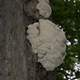 Fungus on the tree in Algonquin Provincial Park, Ontario