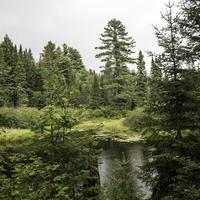 Pond and forest at Algonquin Provincial Park, Ontario