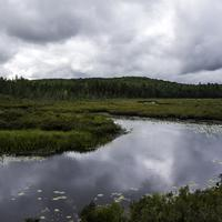 Pond and nature landscape in Algonquin Provincial Park, Ontario