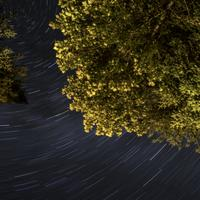 Tree and star-trails at Algonquin Provincial Park, Ontario