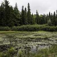 View of the Bog at Algonquin State Park, Ontario