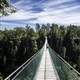 People standing on the long suspension bridge in Eagle Canyon, Ontario