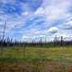 Campbell Highway Landscape under the skies in Yukon Territory, Canada